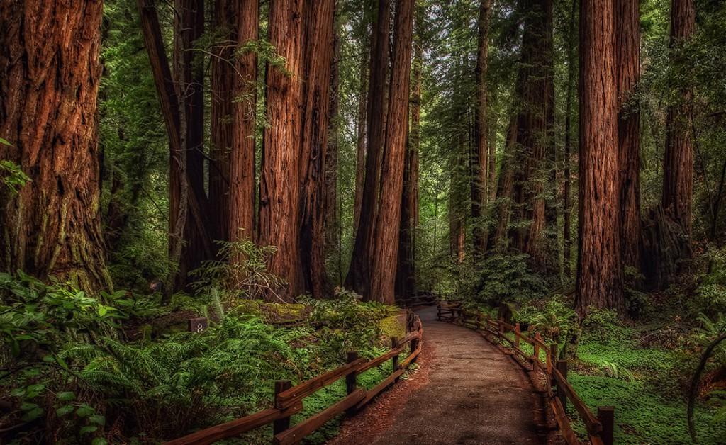 San Francisco City Tours Muir Woods Monterey Carmel Amp Yosemite Tours