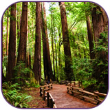 tour_muir-woods