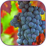 tour_wine