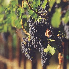 tour_wine-tasting-connoisseur