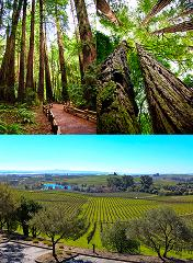 Combo Tour - Muir Woods & Sausalito _ Half-Day Wine Country Tour