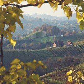 tour_wine_vintage
