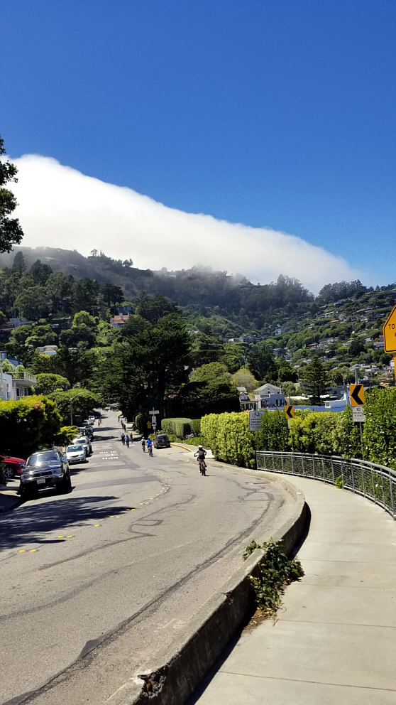 Muir Woods Amp Sausalito Sightseeing Tours A Taste Of San
