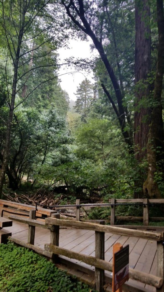 Muir Woods Amp Sausalito Sightseeing Tours A Taste Of San