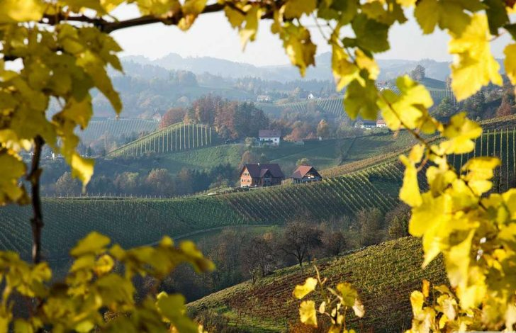 Vintage-Wine-Country-Tour